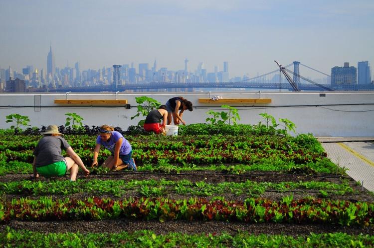 Eagle Street Farm in New York City als Vorbild für Dachfarmen Urban Farming Berlin